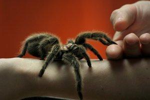 Trpíte arachnofóbiou?