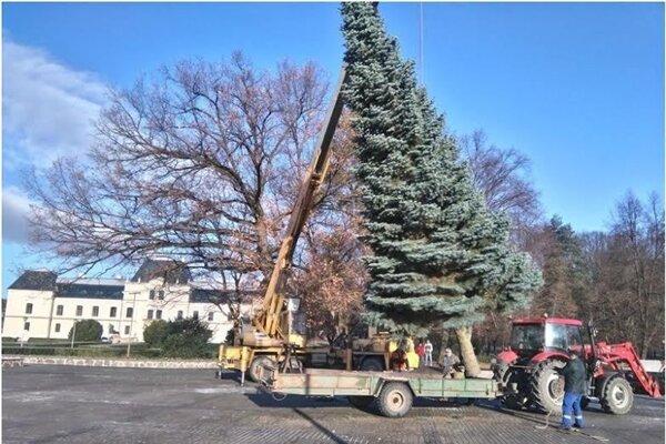 Inštalovanie vianočného stromčeka.