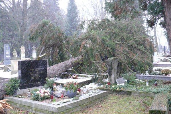 Takáto spúšť zostala po vetrisku na Národnom cintoríne.