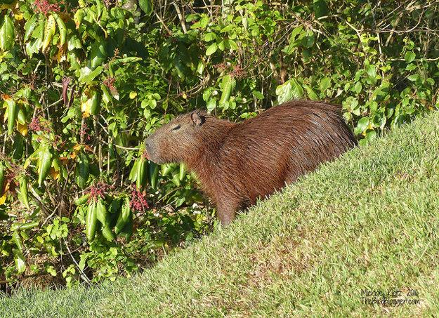 Príroda v Paname sa pýši veľkou biodiverzitou.