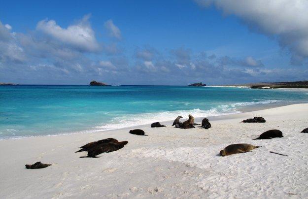 Gardnerova zátoka na ostrove Espanola na Galapágoch patrí medzi 10 najkrajších pláží sveta.