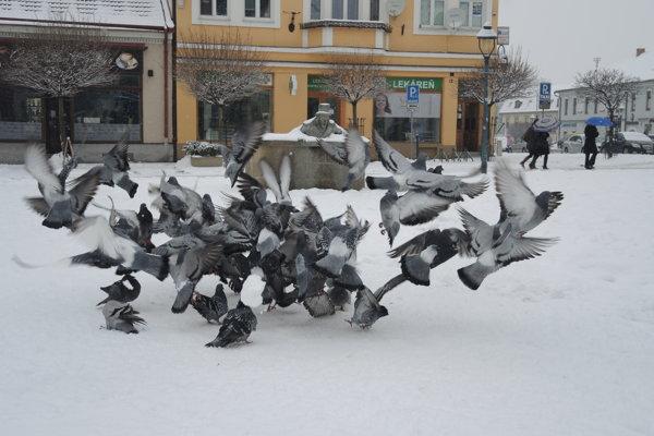 Zima 2015 v Trenčíne