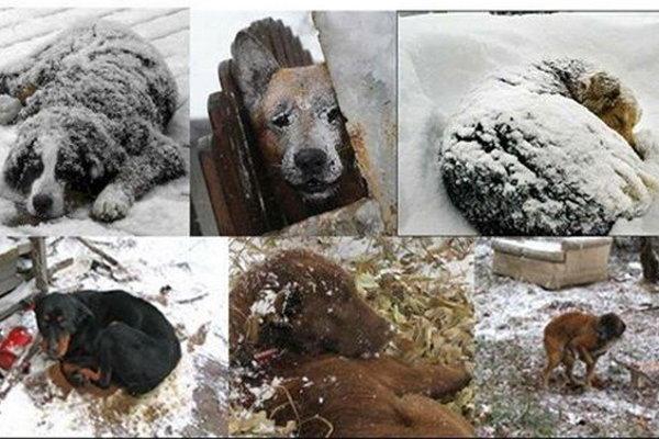 Mrazy môžu pre zvieratá znamenať smrť.