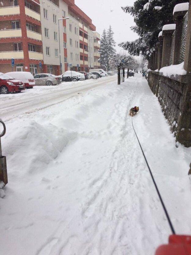 Bakossova ulica