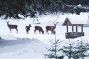 Jeleniu a srnčiu zver treba v zime prikrmovať.