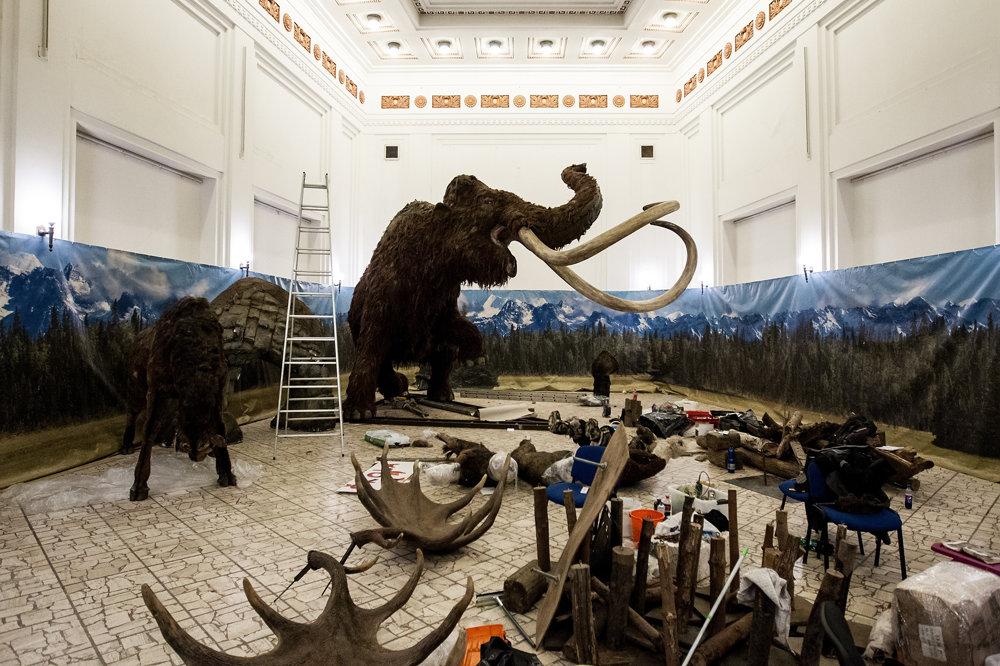 Príprava výstavy Giganty ľadovej doby