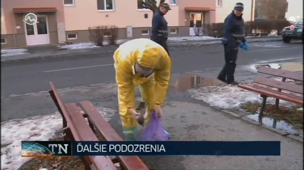 Zber uhynutých holubov v Prešove.
