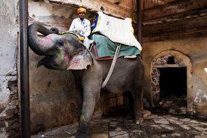 Odpočívajúci slon a mahaut