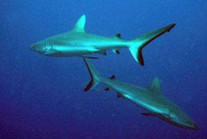Žraloky.