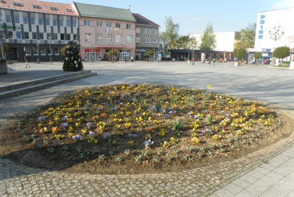 Kvetinový záhon vytvorili na mieste, kde rástol donedávna buk.