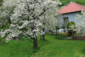 Jar v Lačnove.