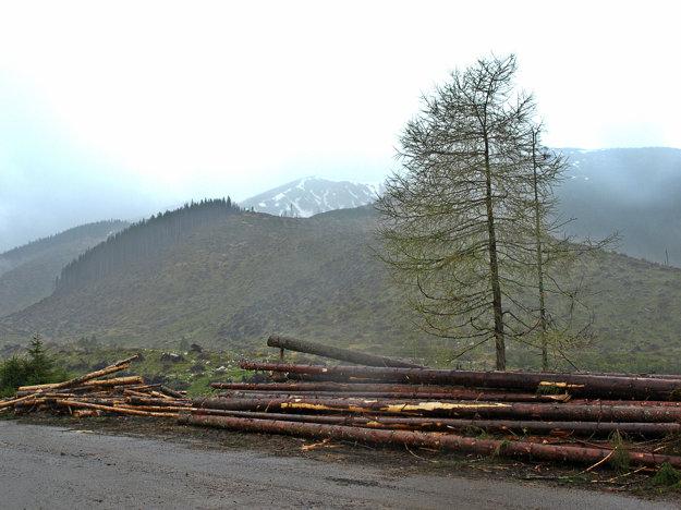 Výruby v oblasti Borov vDemänovskej doline.