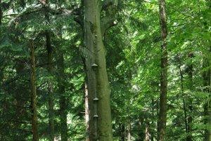 K stromom vo Vlčej majú mnohí ľudia osobný vzťah.