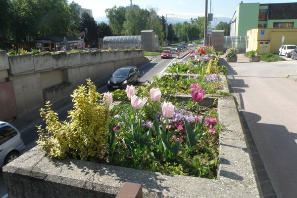 V blízkosti frekventovanej cesty rastú odolné kvety.