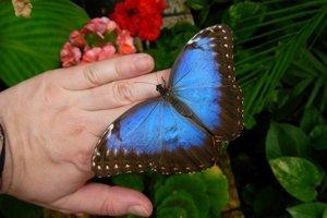 K videniu budú aj takéto nádherné motýle.