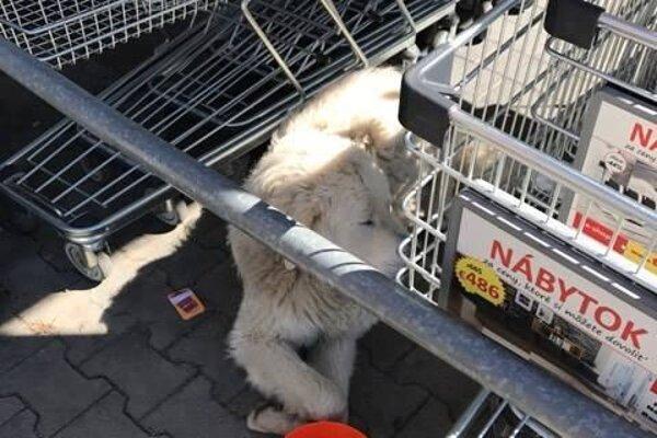 Psíka našli medzi nákupnými vozíkmi.