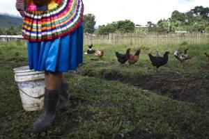Konkurencia zo severu pripravila mnohých mexických poľnohospodárov o prácu.