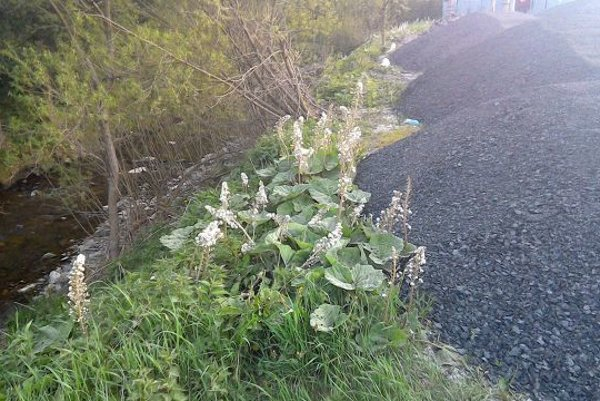 Obyvatelia Makova upozornili na skládku asfaltu.