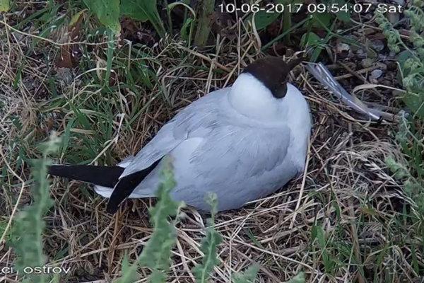 Priamo do hniezda možno nahliadnuť vďaka kamere.