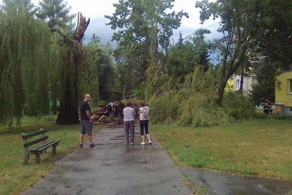 Storočná vŕba na ulici Boženy Nemcovej v Jahodníkoch.