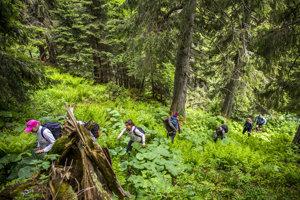 Výstup na kopec, odkiaľ sme videli medvedicu s mláďaťom.