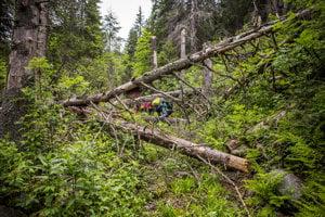Ešte nedávno tu bola cestička, ale padli cez ňu stromy a musíme si nejako poradiť.