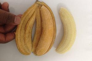 Porovnanie nového kultivaru s obyčajným ugandským banánom.