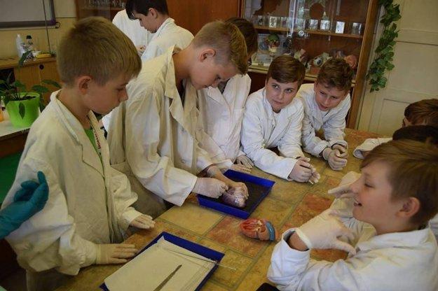 Bravčové srdce. Na táborovej biológii si vyskúšali pitvu srdca, ktoré je podobné ľudskému.