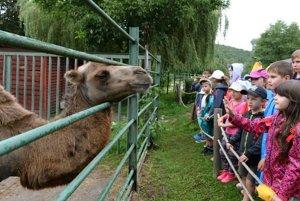Medzi deťmi je o prímestský tábor v zoo veľký záujem.