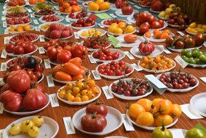 Na snímke odrody paradajok.