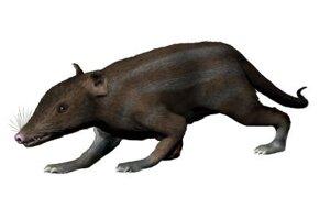 Juramaia sinensis je najstarším zvieraťom z rovnakej vetvy. Jeho ostatky našli v Číne. Žil pred 16-miliónmi rokov.