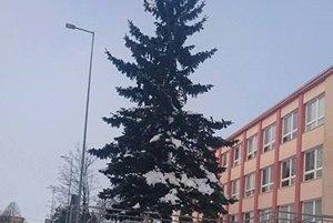 Tento ihličnan sa zmení na jedinečný vianočný stromček.