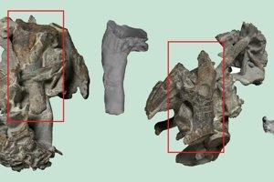 Nájdené fosílie ramennej kosti z Kumimanu biceae.
