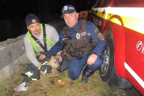 Mestskí policajti a hasiči zachraňovali v rieke Turiec topiacu sa srnku.
