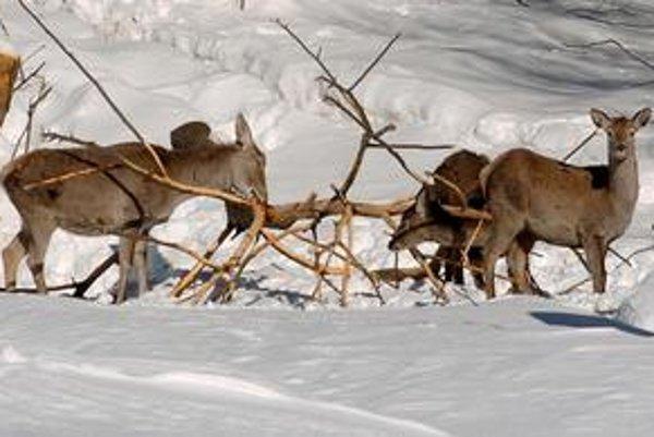 Vysoký sneh a mráz zvieratá vyčerpáva.