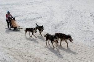 Na Králikoch tento rok psie záprahy nebudú.