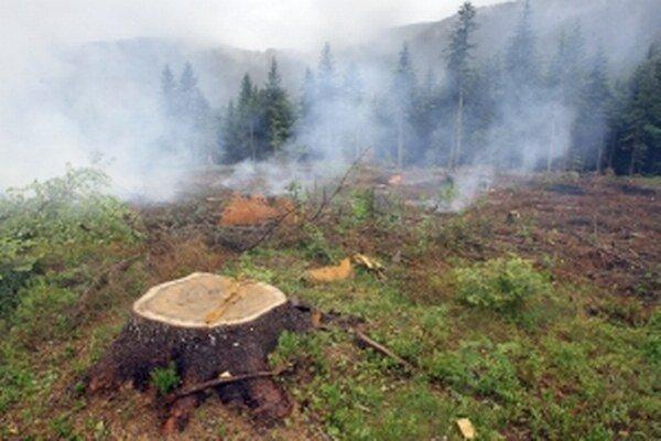 Ohrozené sú najmä lesy.