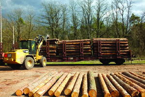 Ťažba dreva.
