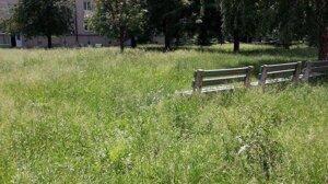 Tráva na mnohých miestach siaha až na úroveň lavičiek.
