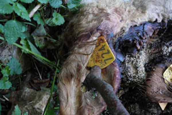 Majitelia zvierat s identifikačným číslom sú registrovaní.