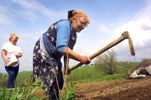 Záhradkári sa konečne môžu venovať svojmu koníčku.