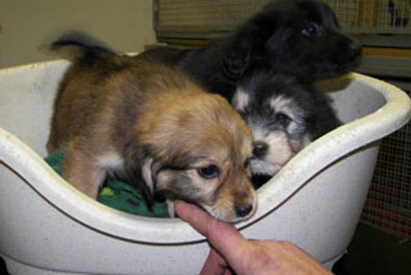 Rodinka desiatich šteniat zostala opustená.