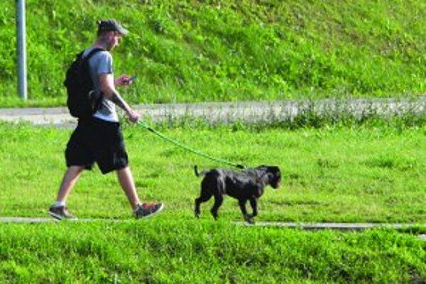 Mesto by nemalo majiteľom prikazovať, kde majú venčiť psov.