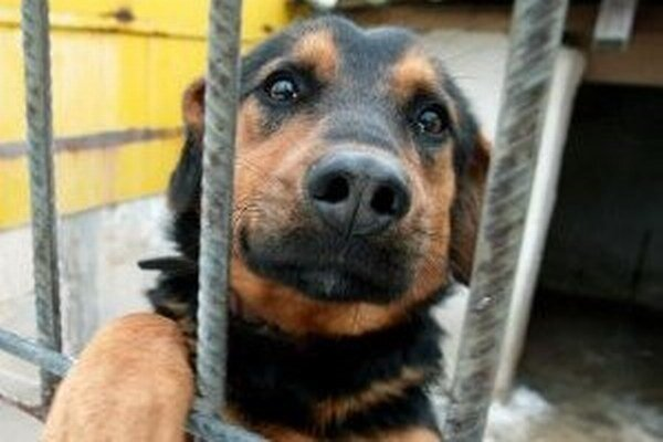 Ďalšou výhodou nového VZN bude odpustenie dane za psa v prípade, že si ho adoptujeme nielen z  útulku, či karanténnej stanice, ale aj od občianskych združení.
