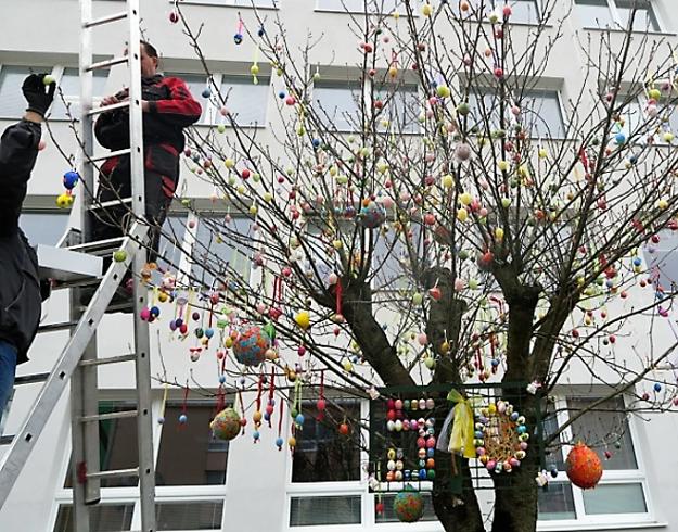 Japonskú čerešňu vo Veľkom Krtíši krášlia kraaslice.