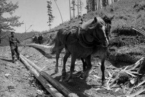 Lesný závod Čierny Váh, ktorý obhospodaruje 23 tisíc ha lesa, postihla vlani koncom novembra tak ako ďalšie lesné oblasti veterná smršť. Prehnala sa cez lesy, dolámala a vyvrátila 100 tisíc PLM dreva.
