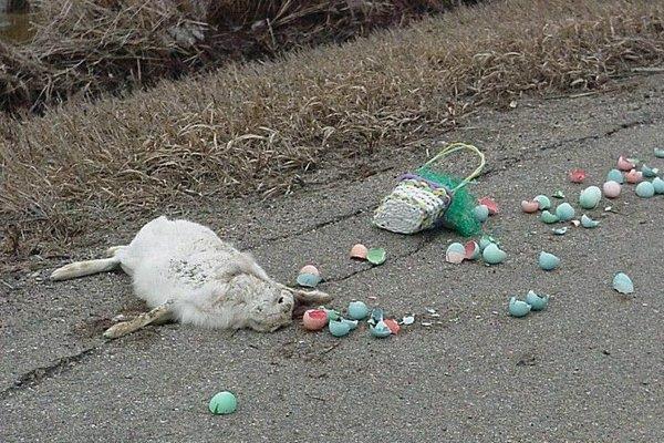 Veľkonočný zajačik krátko po nehode.