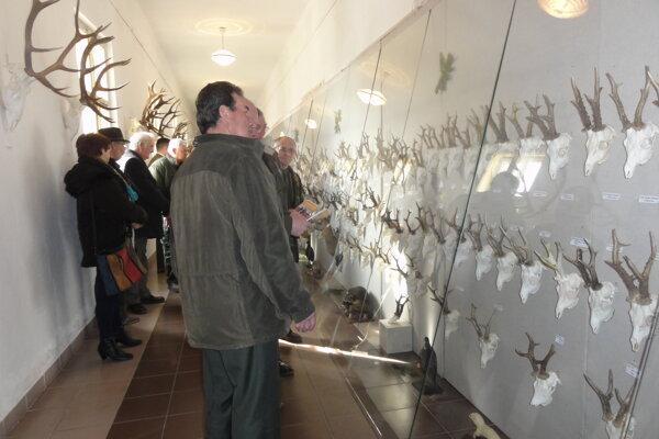 Tento týždeň môžete navštíviť aj výstavu Trofeje poľovnej zveri.