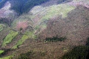 Z výšky viac ako pol kilometra vyzerali niektoré oblasti Tatier ako pasienky. Až z menšej výšky sa ukázali stráne posiate stromami.