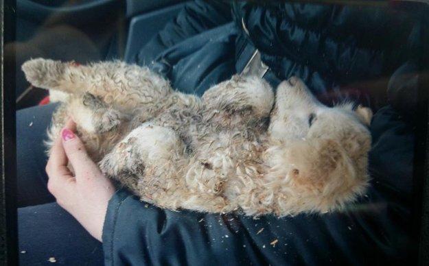 V čase. keď zo smetiska ľudia z útulku zobrali, bolo šteniatko špinavé a vysilené.